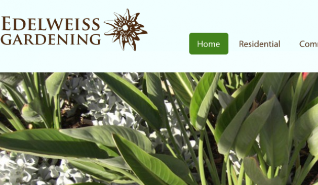 Edelweiss Gardening